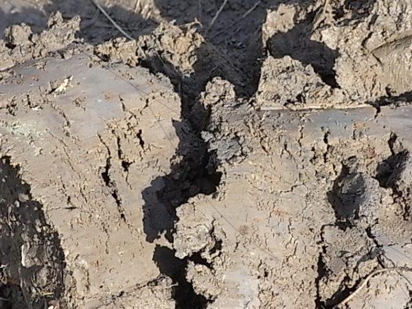 重粘土質の田んぼ